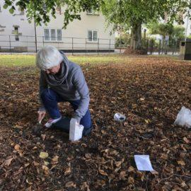600 bulbs planted